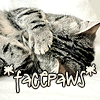 Rena: Cat Facepaws