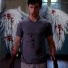 Bloody Wings
