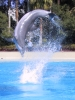 Flip - Dolphin