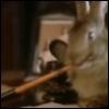 pen_rabbit