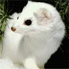 sadweasel userpic