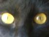 katie, eyes