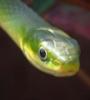 serpenttree2