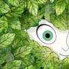 wallows: annie_forest