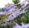 silver_sprig: Flower scene