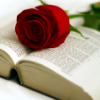 stock: open book rose