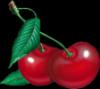 cherry1989: Kirsikka1