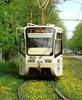 трамвайка весной
