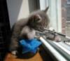 kitty w/gun