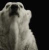 медвед, превед
