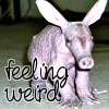 alligator138: Feeling weird