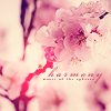 write_my_dreams: Cherry Blossoms