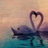 Crystal: MISC: Swan Love