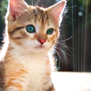 Kitty wut