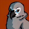 african grey stare - commish