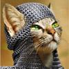 боевой котъ