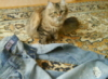lioness178 userpic