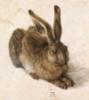 Дюрер, заяц