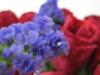 Anniversary flower
