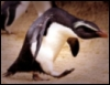 bad day penguin
