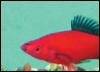 miniaquarium userpic