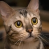 Cat_up