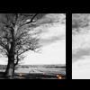 image; tree