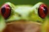 взгляд жабы