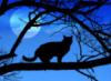 Человек и Кошка: moon_cat