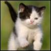 lady_delfina userpic