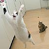 cat yay