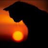 felineprotector userpic