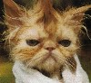 pubicbeard userpic