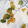 wilted leaves never felt so alive