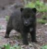 darkblackwolf userpic