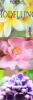 floralmodelling userpic