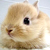 Bunny Stuffs!