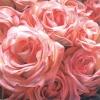 roseohseven [userpic]