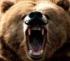 bearlyonearth userpic