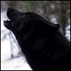 the_wild_wolf userpic