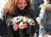 linda_ferret userpic
