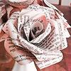 Jacqueline: ms paper rose