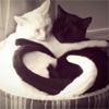 Jacqueline: ms cat tail love