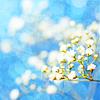butterflybee260: blue spring