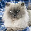 kat, spooky, cat