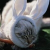 cat-o-rabbit