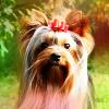 izfierce userpic