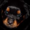 puppyDean