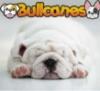 bullcanes userpic