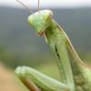 mantis tripping